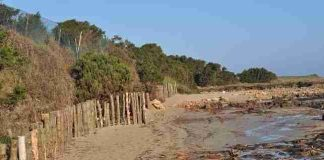 Parco dune costiere rispristino spiaggia duna 4