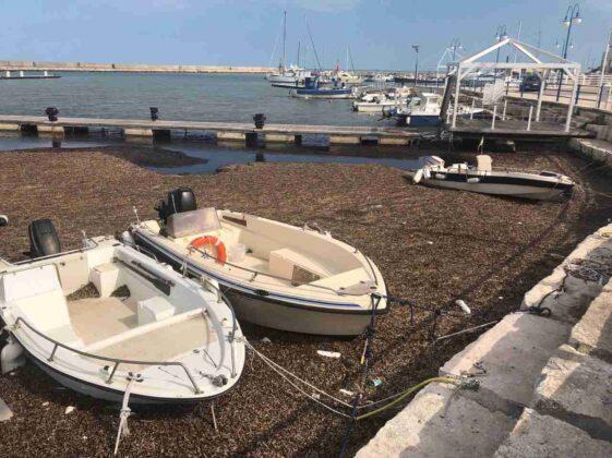 Il commissario prefettizio ha firmato il progetto di rimozione delle alghe al porto. Costo 100mila euro