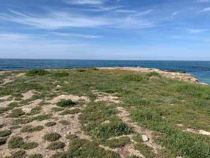 Posidonia Spiaggiata